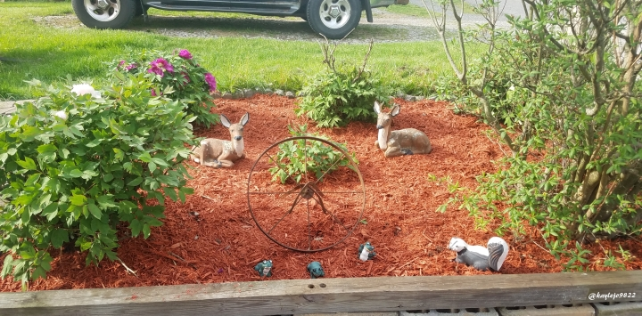 flower bed 2